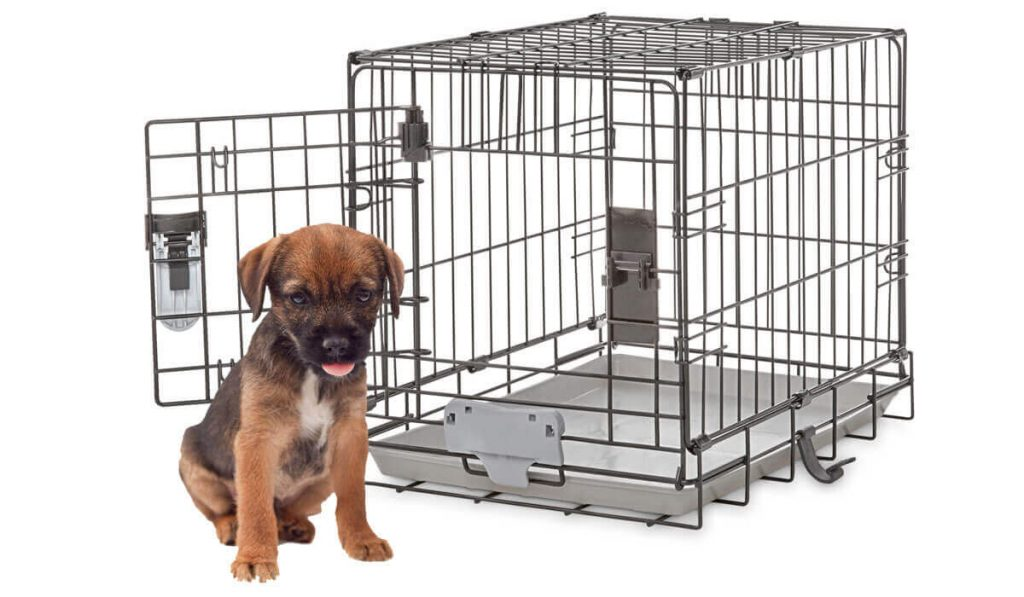 how-to-kennel-train-a-puppy